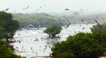 严格保护永续利用湿地